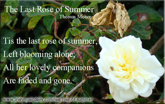 Last-Rose-of-Summer-Thomas-Moore